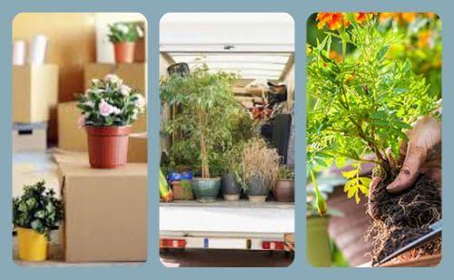 plantas para mudarse a guayaquil